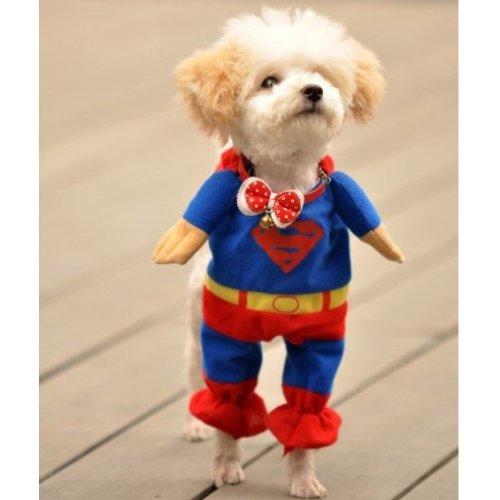 55% OFF, Pet by Couture - Superhero Costume Superman,Drop from $17.99 to $7.99, Free Shipping by Onfancy.com